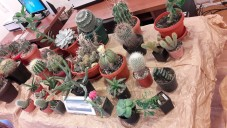 cactusi6