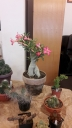 cactusi7