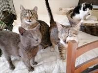 pisici5