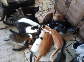pisici6